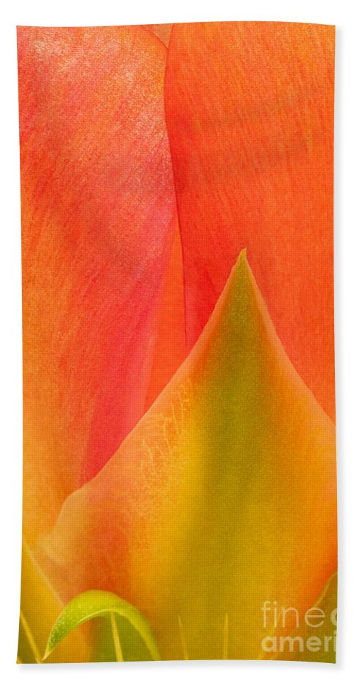 Texas Prickly Pear Beach Towel featuring the photograph Prickly Pear Flower Petals Opuntia Lindheimeni In Texas by Dave Welling