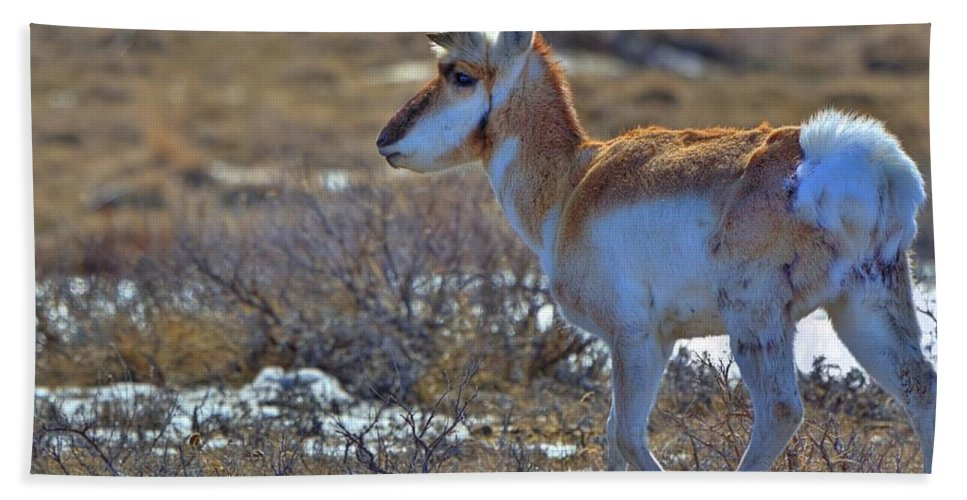 Cypress County Beach Towel featuring the photograph Pronghorn Buck by James Anderson
