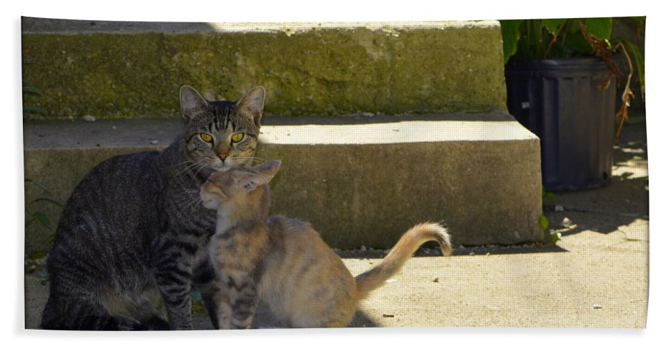 Cat Beach Towel featuring the photograph Protection by Kathy Barney