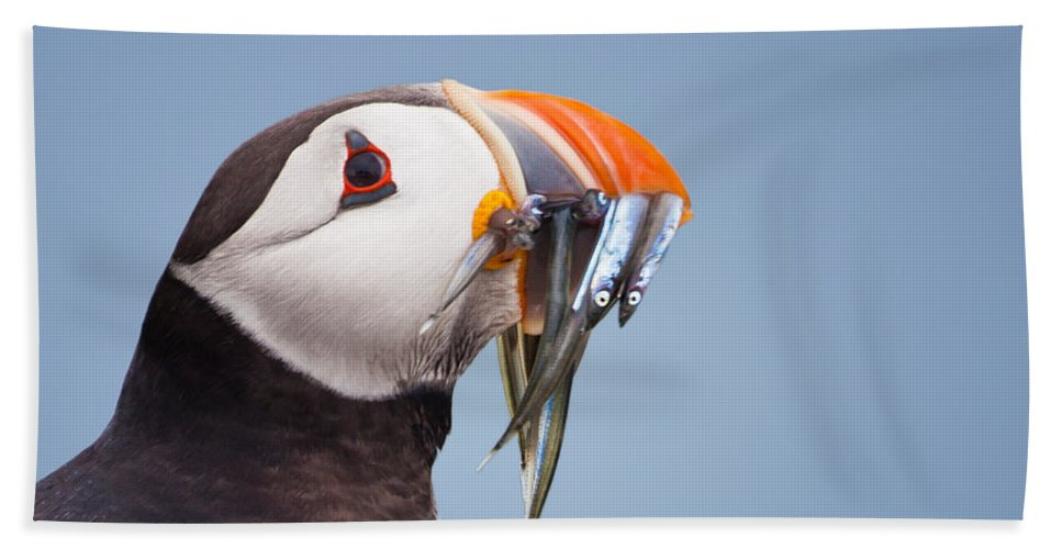 Atlantic Puffin Beach Towel featuring the photograph Puffin With Sandeels Portrait by Liz Leyden