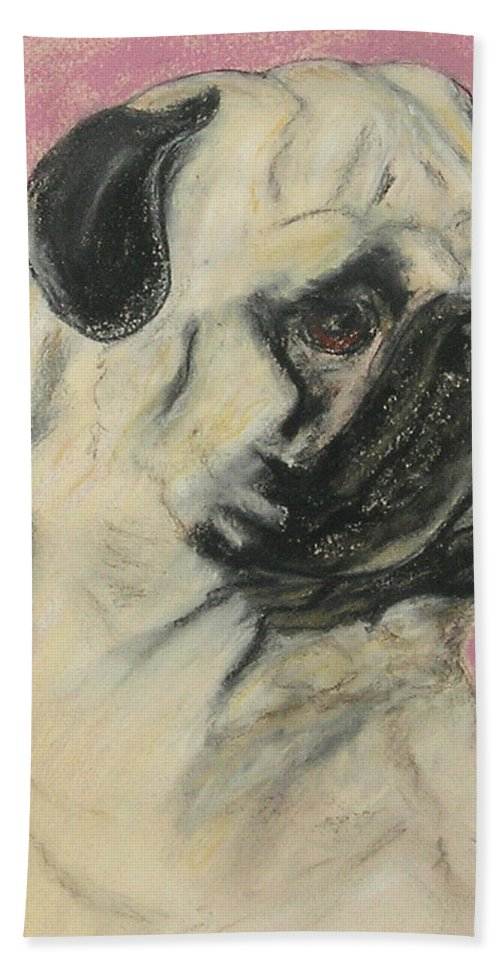 Pug Beach Towel featuring the drawing Pugnacious by Cori Solomon