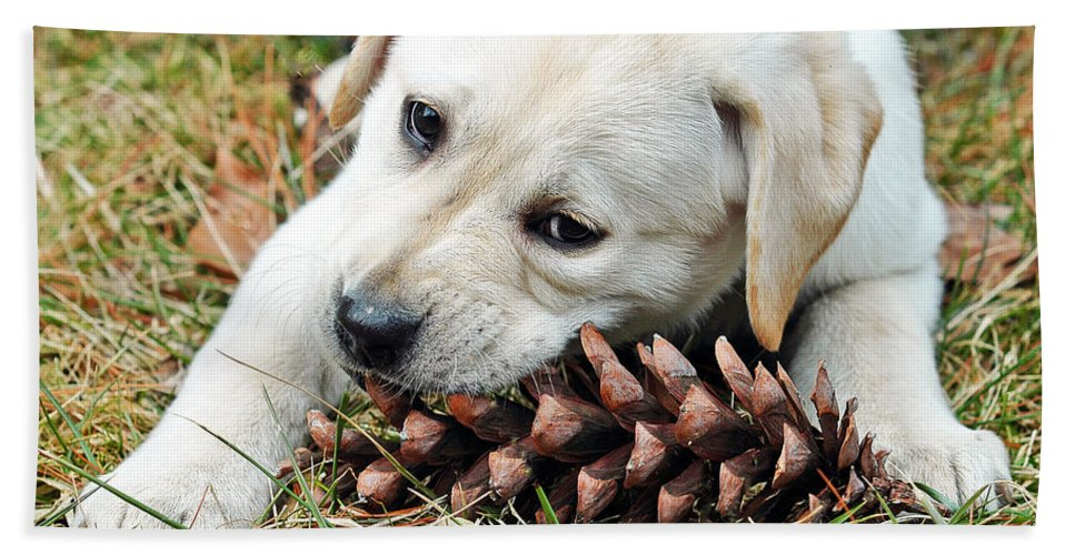Animals Beach Towel featuring the photograph Puppy With Pine Cone by Lisa Phillips