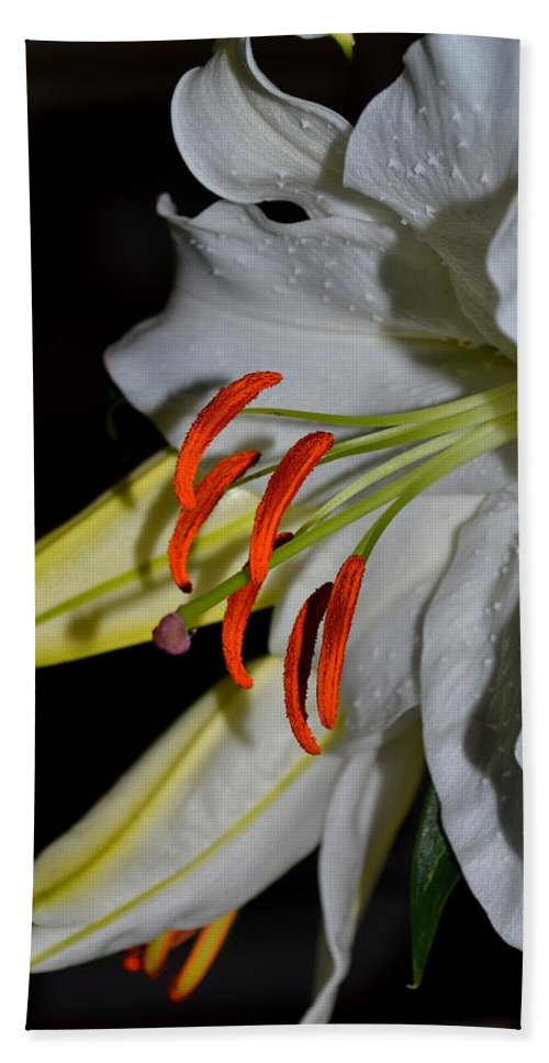 Lily Beach Towel featuring the photograph Pure Lily by Deena Stoddard