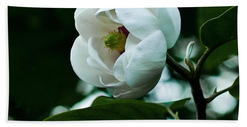 Magnolia Beach Towel featuring the photograph Purity by Barbara McMahon