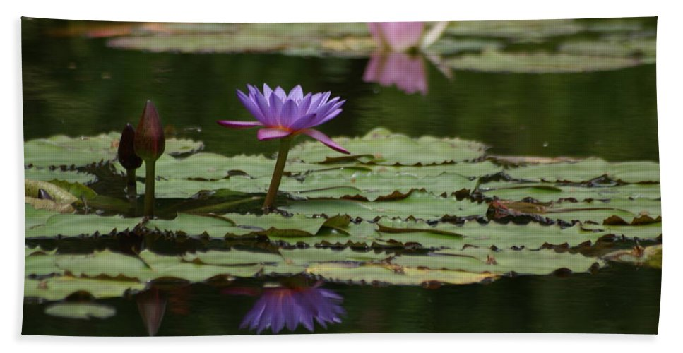 Purple Blossoms Beach Towel featuring the photograph Purple Blossoms Floating by Patricia Twardzik