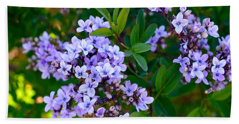 Flower Beach Towel featuring the photograph Purple Flowers by Brent Dolliver