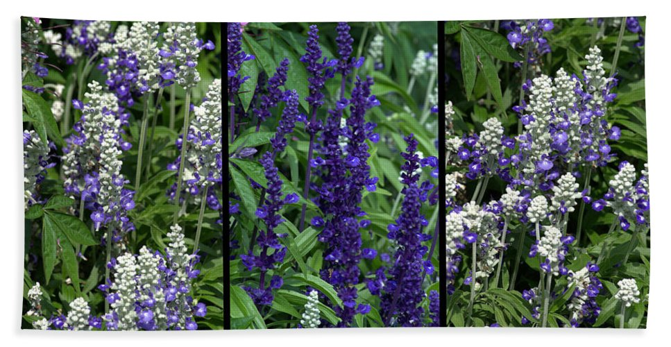Purple Beach Towel featuring the photograph Purple Flowers by Tikvah's Hope