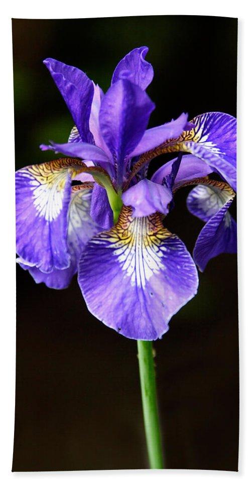 3scape Beach Sheet featuring the photograph Purple Iris by Adam Romanowicz