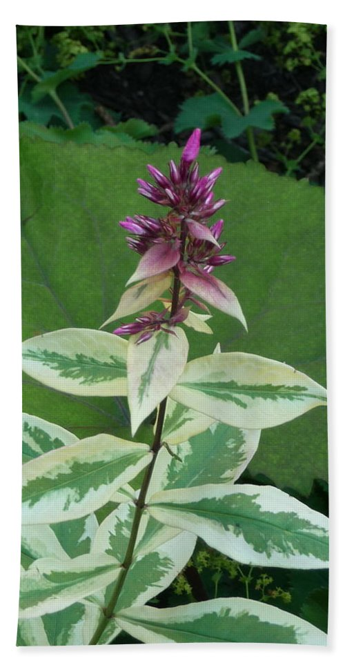 Purple Beach Towel featuring the photograph Purple Tipped Flower by Jon Cody