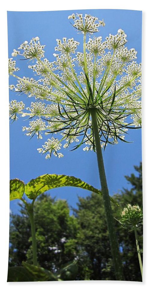 Queen Anne's Lace Beach Towel featuring the photograph Queen Anne's Lace by MTBobbins Photography
