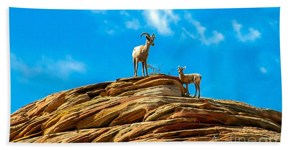 Bighorn Sheep Beach Towel featuring the photograph Queen Ewe by Robert Bales
