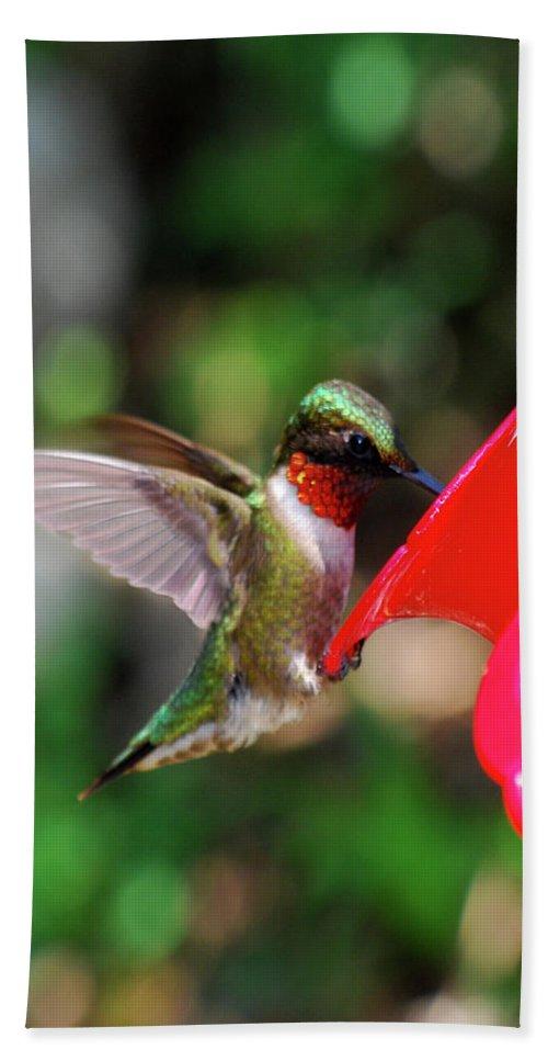 Hummingbird Beach Towel featuring the photograph Radiant Ruby by Lori Tambakis