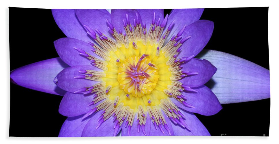 Royal Purple Water Lily Beach Towel featuring the photograph Radiant #2 by Judy Whitton