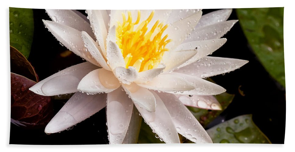 Cindy Archbell Beach Towel featuring the photograph Raindrop Water Lilly by Cindy Archbell