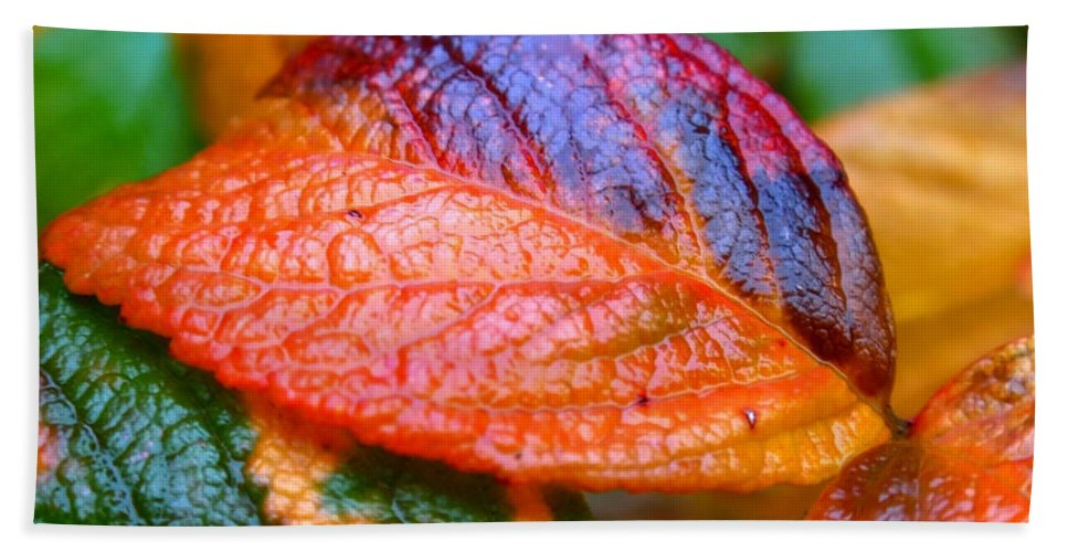 Leaf Beach Towel featuring the photograph Rainy Day Leaves by Rona Black