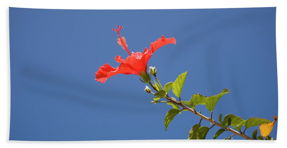 Hibiscus Beach Towel featuring the photograph Reaching For The Sky by Diane Macdonald