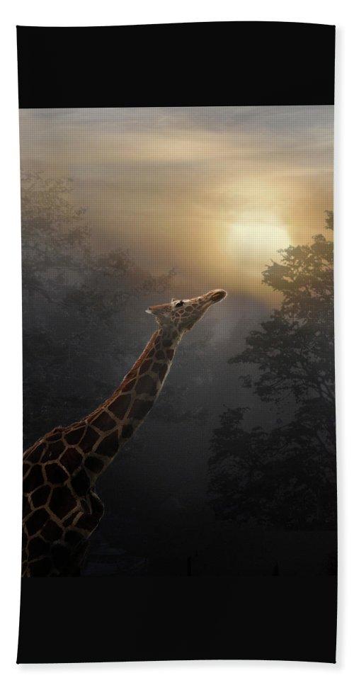Giraffe Beach Towel featuring the photograph Reaching by Melinda Hughes-Berland