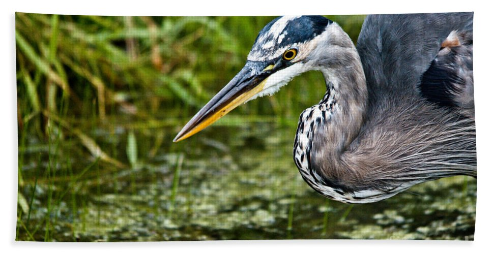 Beach Towel featuring the photograph Ready To Pounce by Cheryl Baxter
