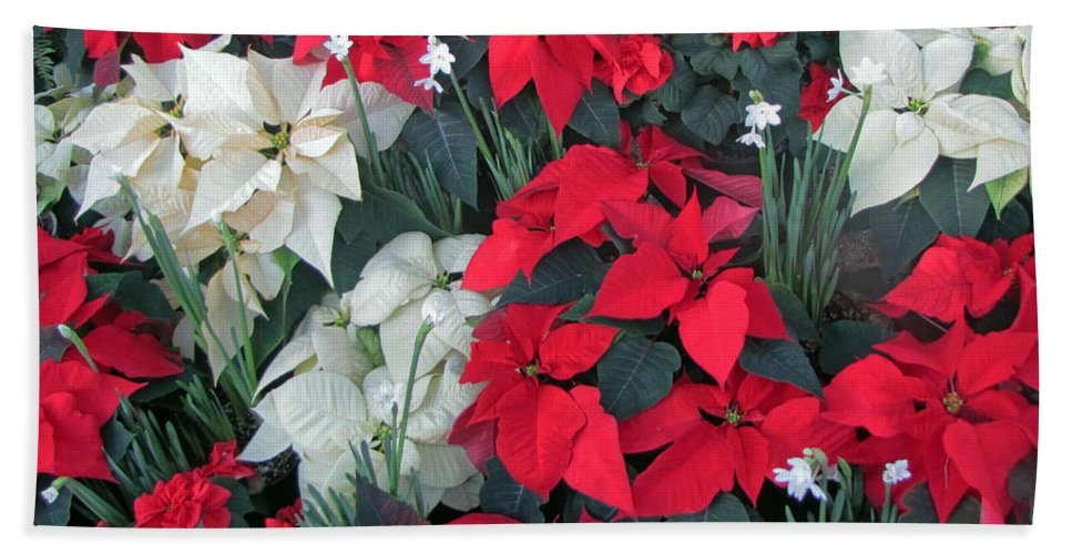 Red And White Poinsettias Beach Towel For Sale By Tikvah S Hope