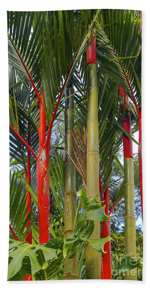 Arena Volcano Region Costa Rica Red Bamboo Tree Trees Leaf Leaves Nature Beach Towel featuring the photograph Red Bamboo by Bob Phillips