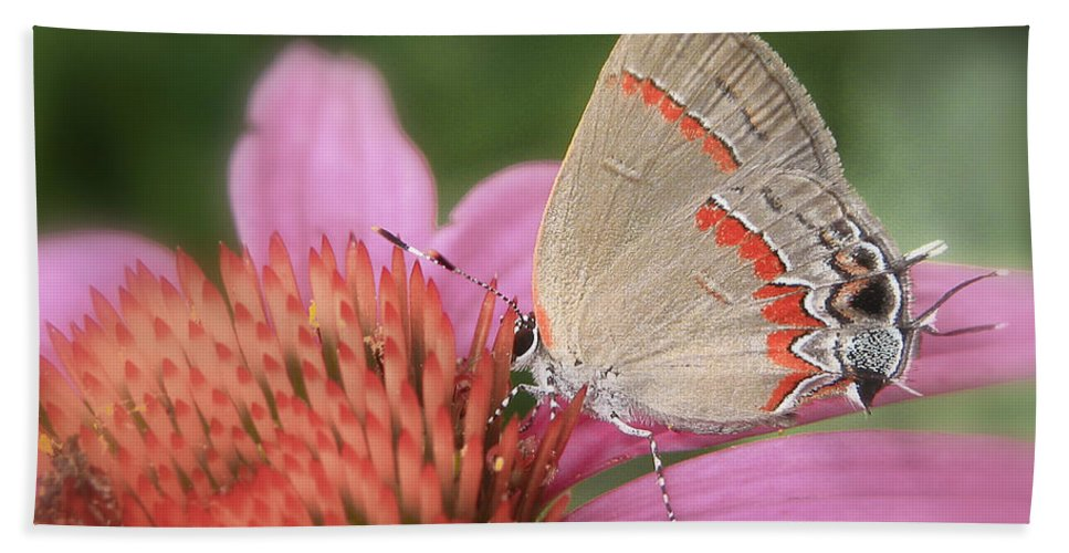 Butterfly Beach Towel featuring the photograph Red Banded Hairstreak by David and Carol Kelly