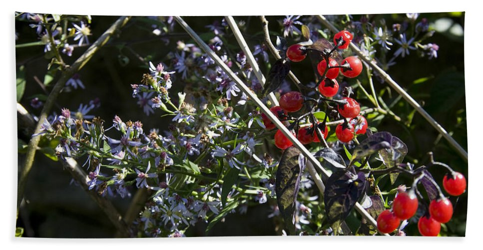 Autumn Beach Towel featuring the photograph Red Berries And Violet Flowers by John Clark