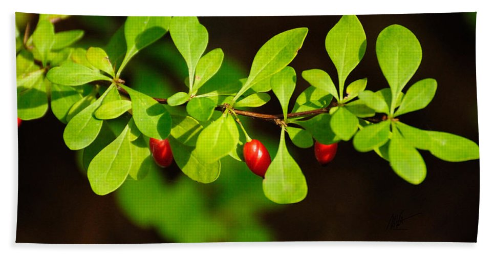 Berry Beach Towel featuring the photograph Red Berries by Mark Valentine