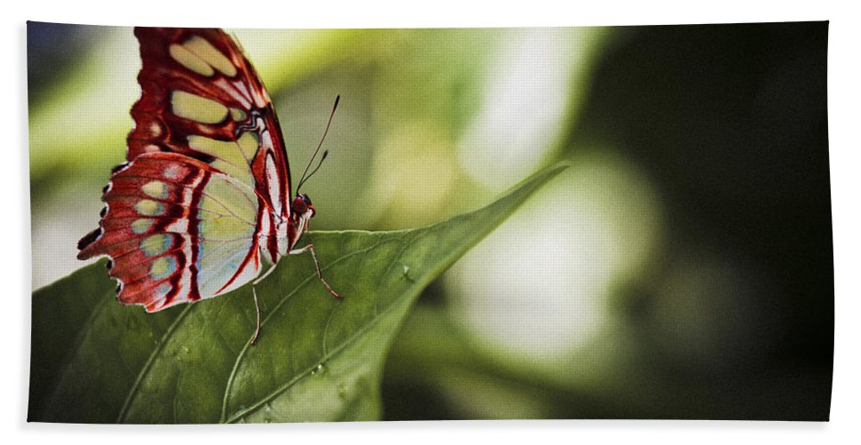 Florida Beach Towel featuring the photograph Red Butterfly by Bradley R Youngberg