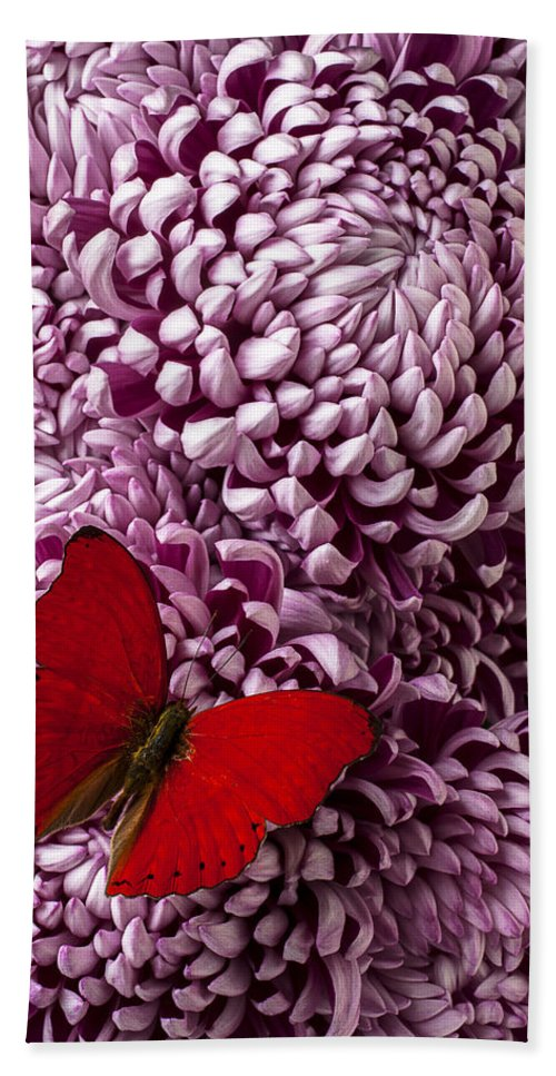 Red Butterfly Beach Towel featuring the photograph Red Butterfly On Red Mum by Garry Gay