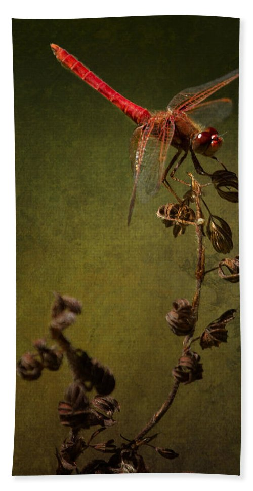 Red Dragonfly Beach Towel featuring the photograph Red Dragonfly On A Dead Plant by Belinda Greb