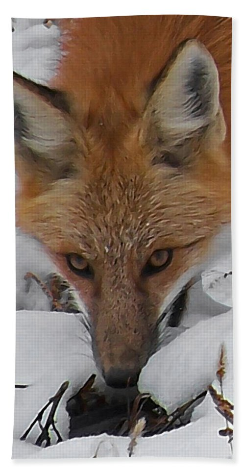 Animals Beach Towel featuring the digital art Red Fox Upclose by Ernie Echols