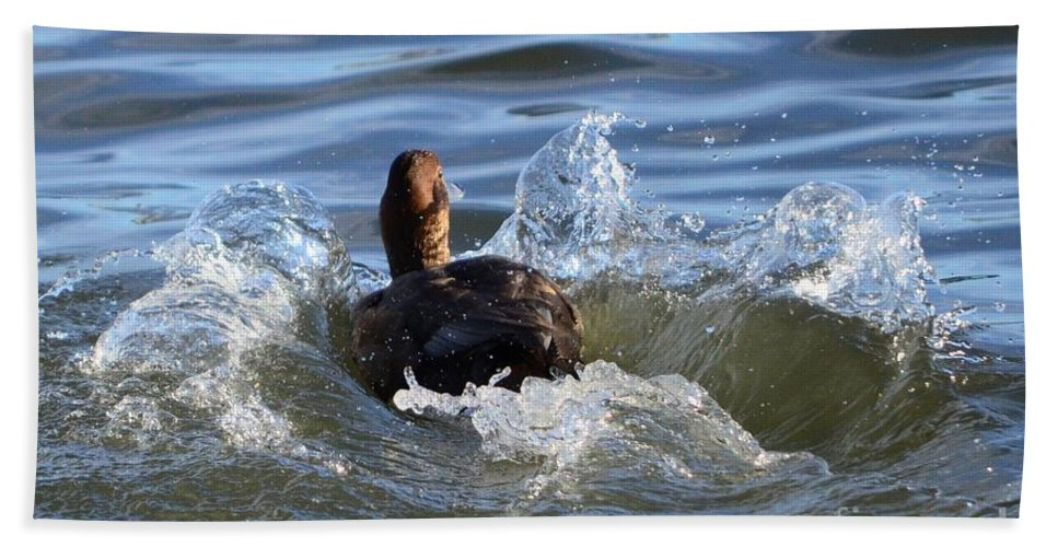 Red Head Duck Beach Towel featuring the photograph Red Head Duck Resurfaces With A Splash by Debra Martz