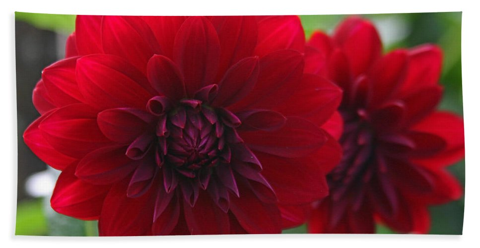 Flowers Beach Towel featuring the photograph RED by Hugh Carino