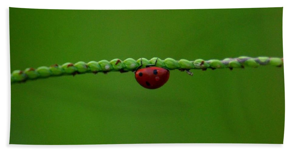 Red Ladybug Beach Towel featuring the photograph Red Ladybug by Maria Urso