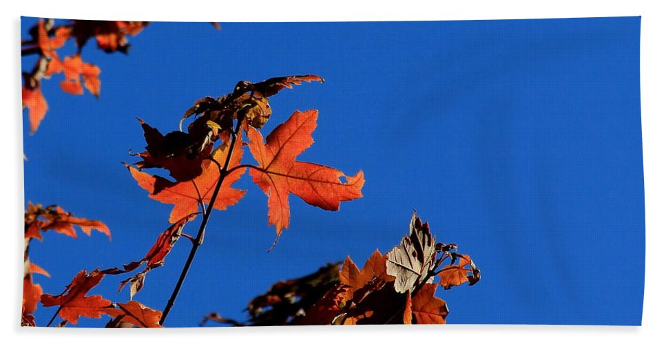 Blue Beach Towel featuring the photograph Red Leaves Blue Sky by Kenny Glotfelty