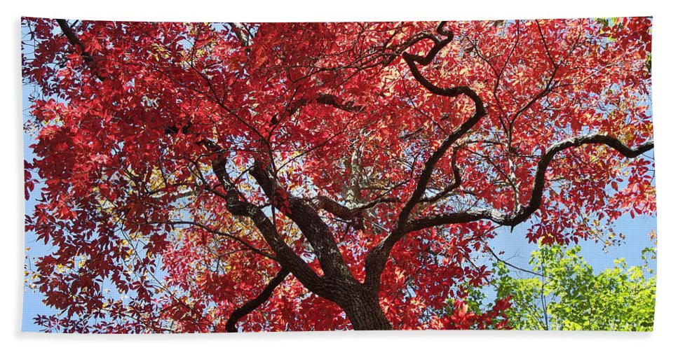 Plants Beach Towel featuring the photograph Red Leaves On Tree by Duane McCullough