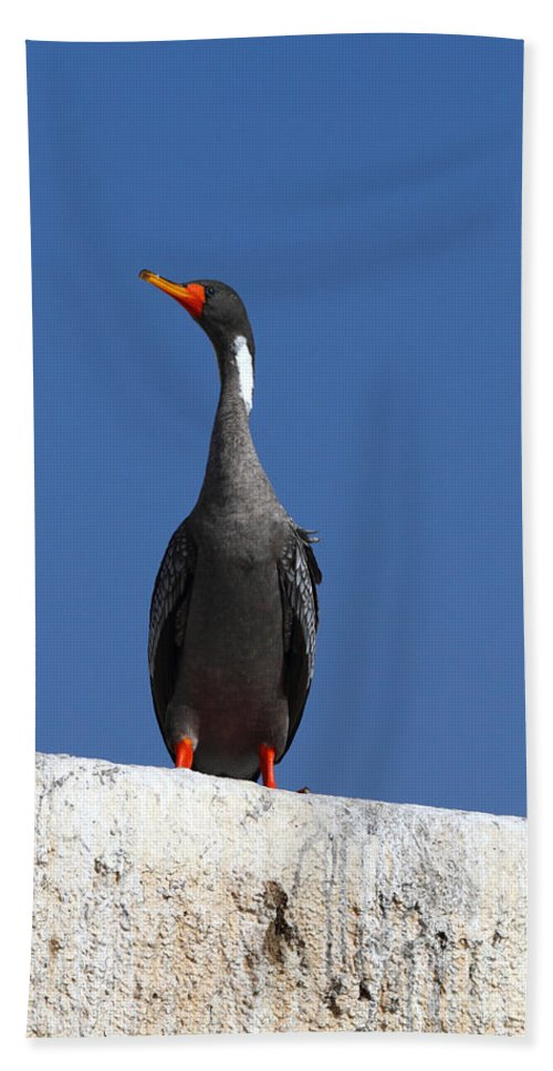 Cormorant Beach Towel featuring the photograph Red Legged Cormorant by James Brunker