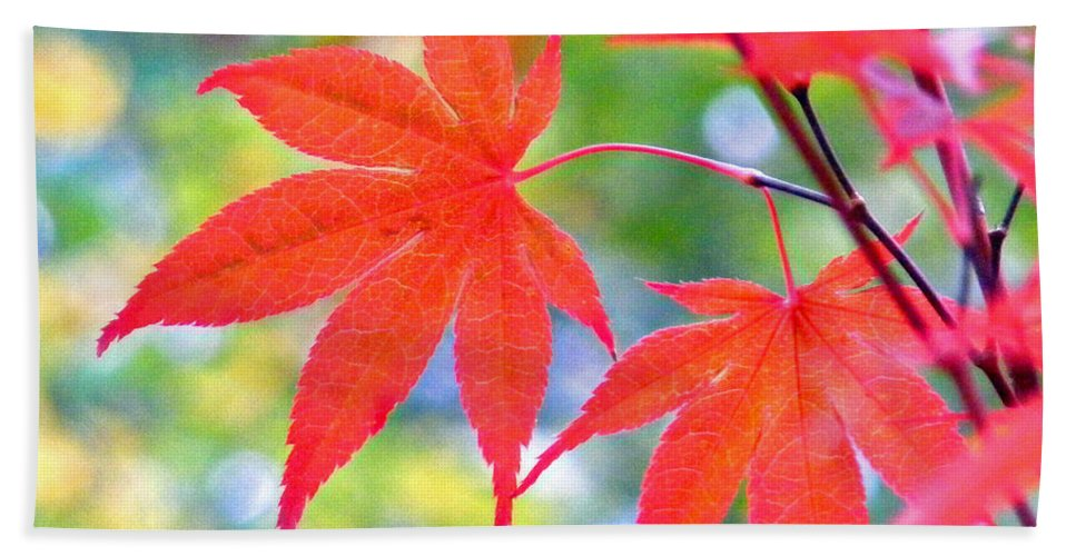 Plants Beach Towel featuring the photograph Red Maple Leaves by Duane McCullough