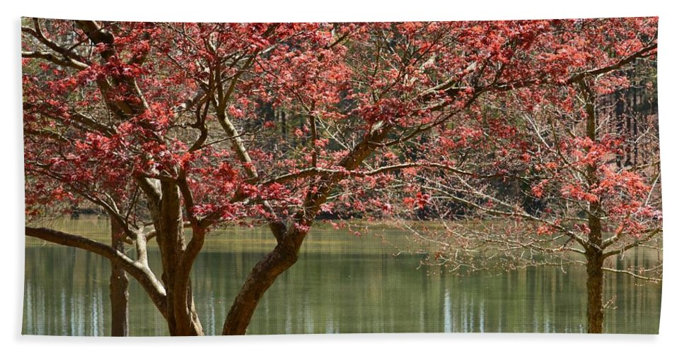 Red Maple Beach Towel featuring the photograph Red Maple by Maria Urso