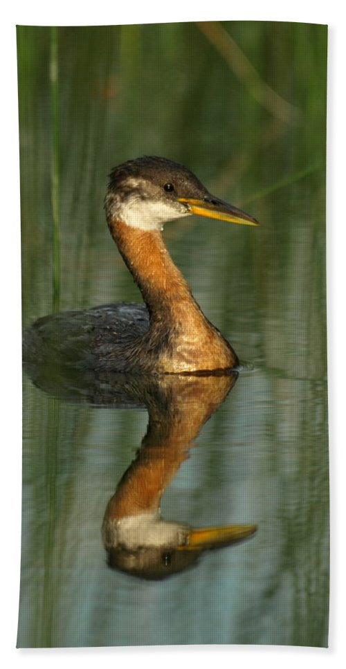 Peterson Nature Photography Beach Towel featuring the photograph Red-necked Grebe by James Peterson