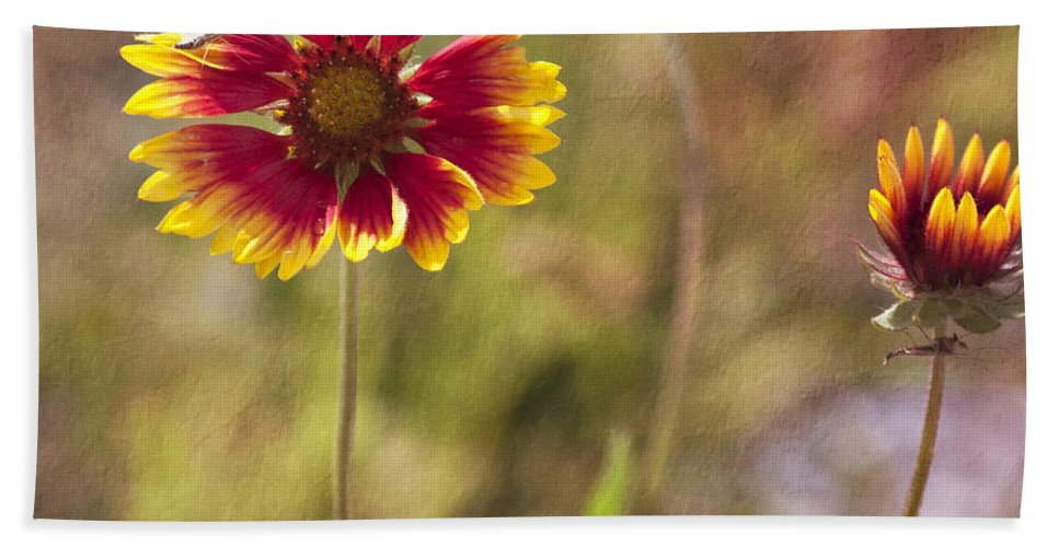 Flowers Beach Towel featuring the photograph Red On Yellow by Pam Holdsworth
