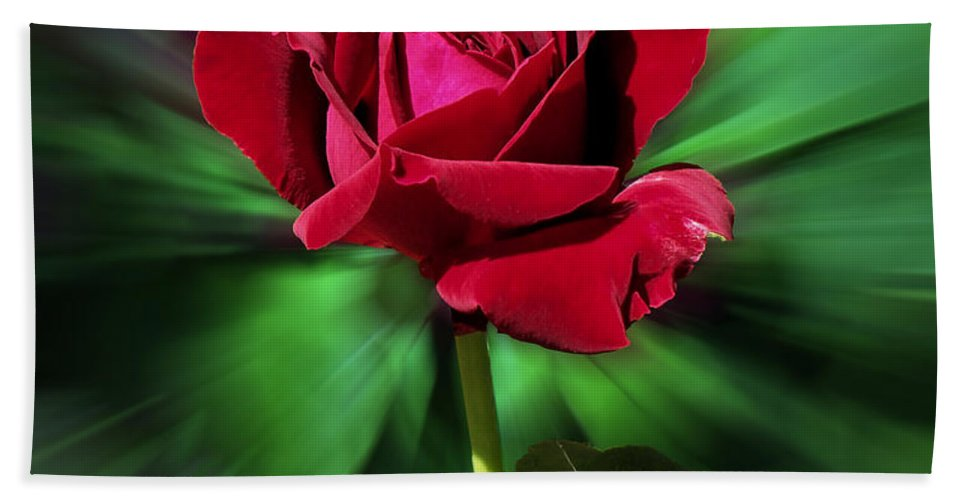 Red Rose Beach Towel featuring the photograph Red Rose Green Background by Thomas Woolworth