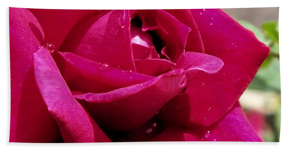 Red Beach Towel featuring the photograph Red Rose Up Close by Thomas Woolworth