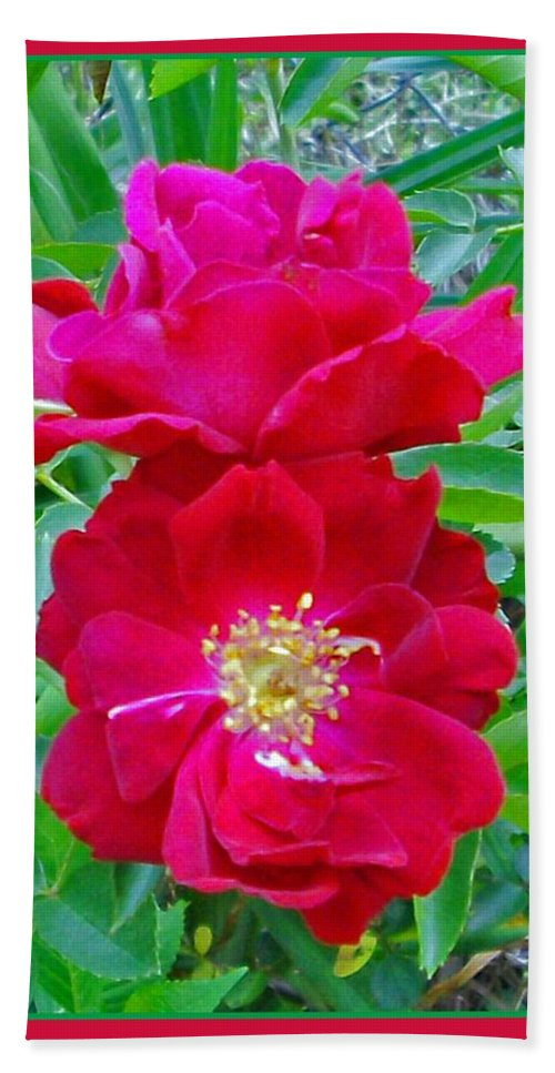 Photograph Beach Towel featuring the photograph Red Roses by Marian Bell