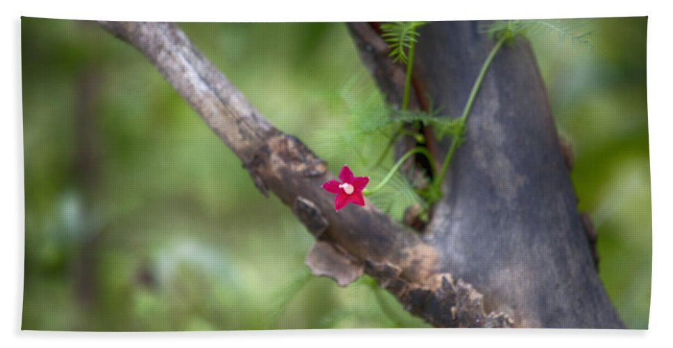 Red Beach Towel featuring the photograph Red Simplicity V3 by Douglas Barnard