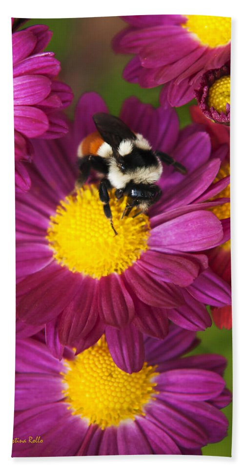 Bee Beach Towel featuring the photograph Red-tailed Bumble Bee by Christina Rollo