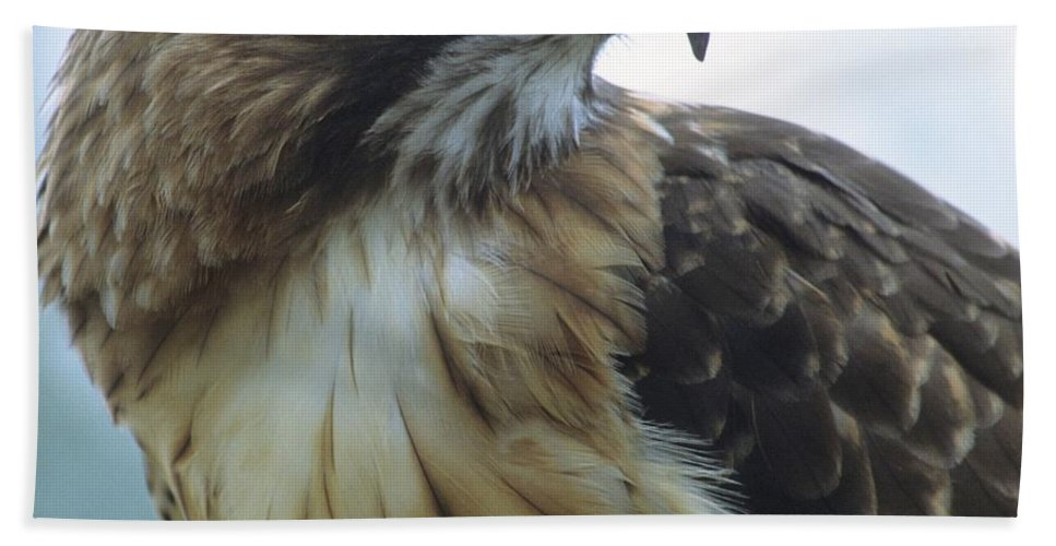 Hawk Beach Towel featuring the photograph Red-tailed Hawk Profile by Larry Allan