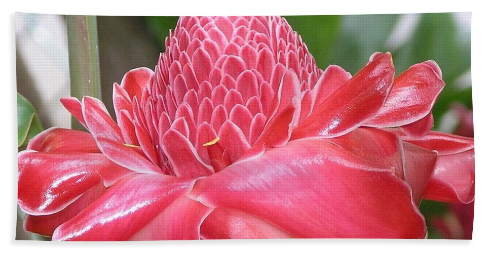 Ginger Beach Towel featuring the photograph Red Torch Ginger by Mary Deal