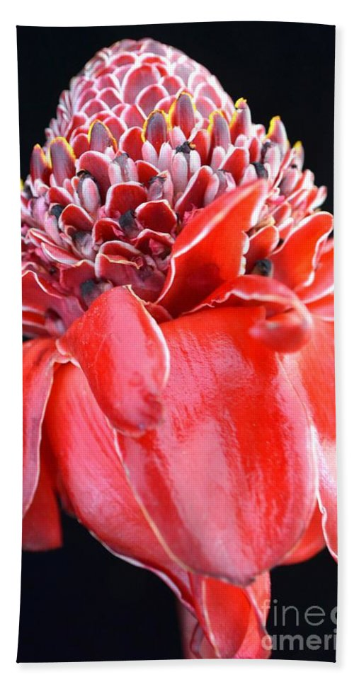Flowers Beach Towel featuring the photograph Red Torch Ginger On Black by Mary Deal