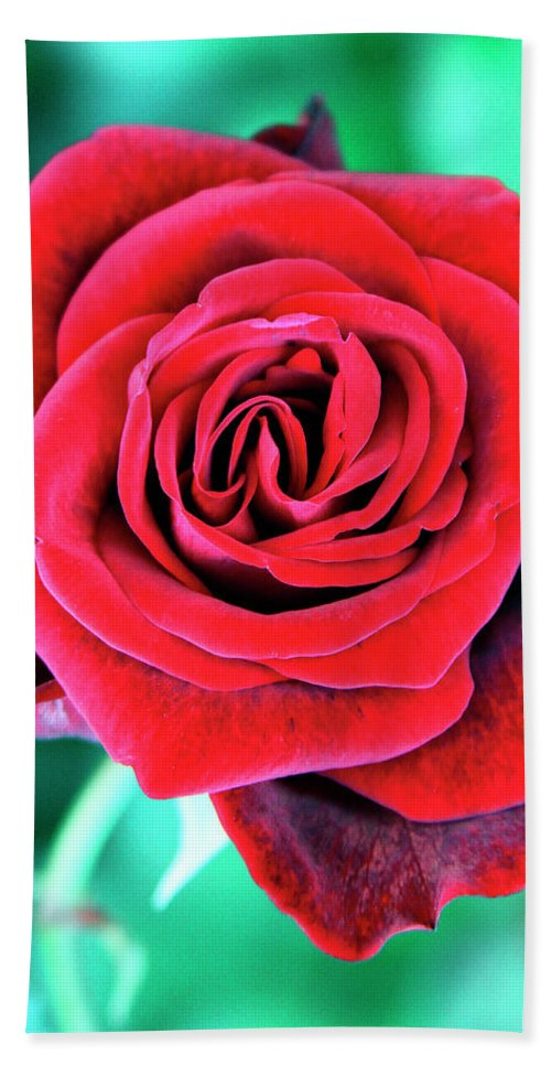 Rose Beach Towel featuring the photograph Red Velvet Palm Springs by William Dey